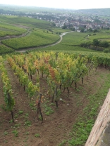 Which Alsace Grand Cru is this?