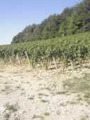 Can you guess the region? Vineyard site?